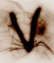 venrav